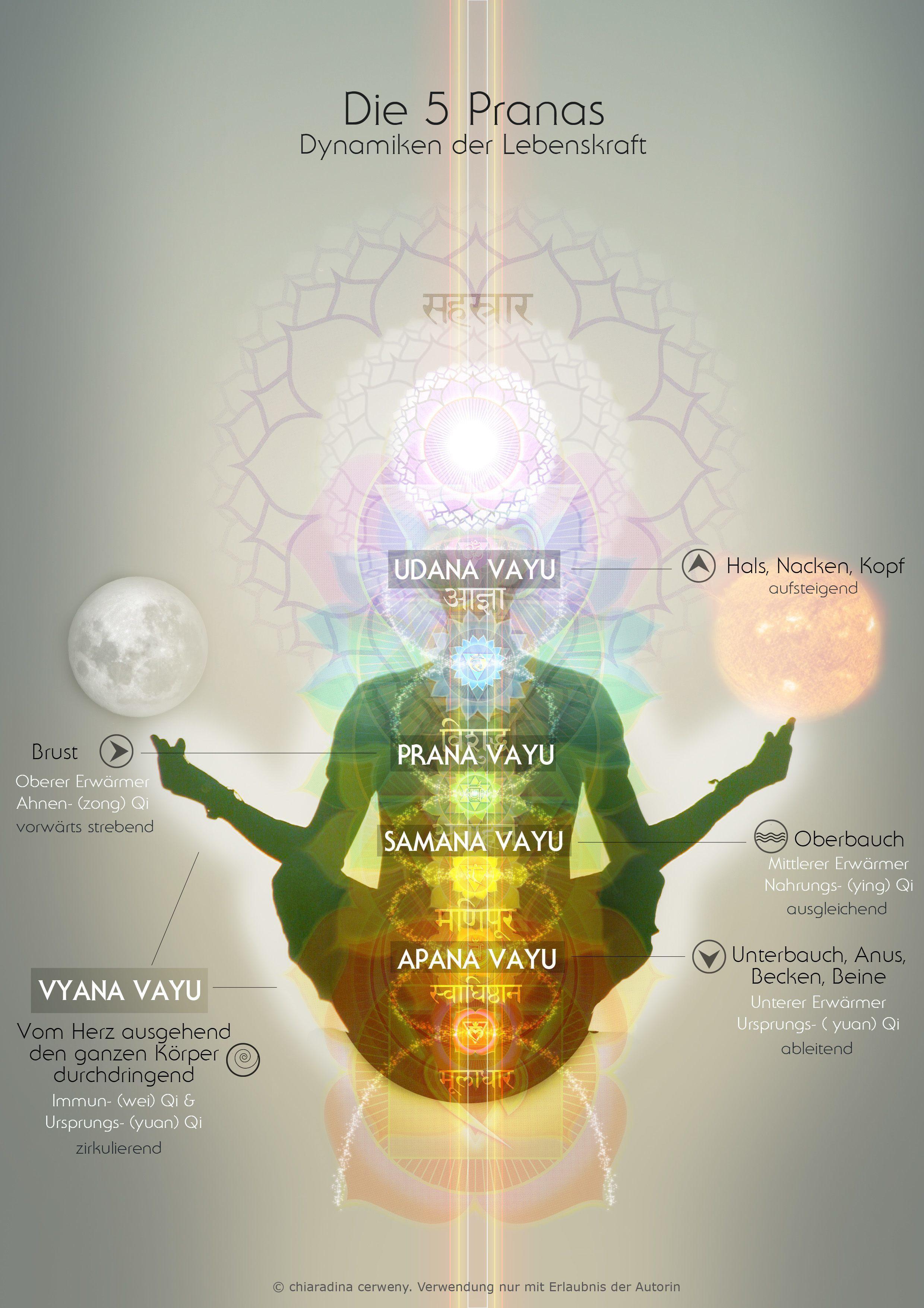 Die fünf Vāyus & Phasen unseres Atems