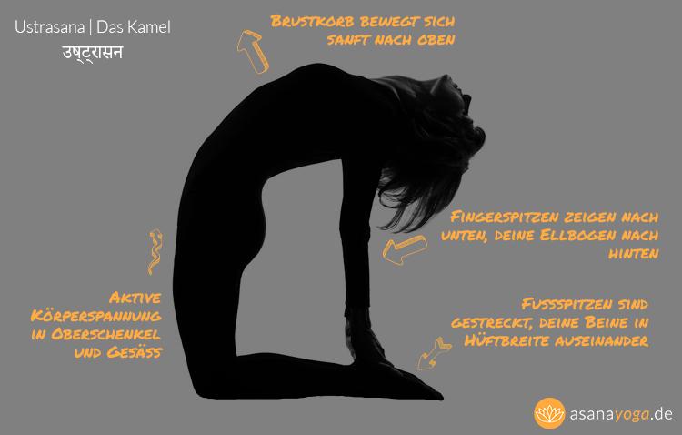 Infografik vom Yoga Kamel Ustrasana