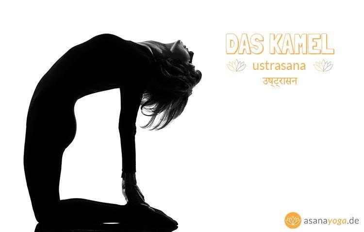 Yoga Kamel Ustrasana