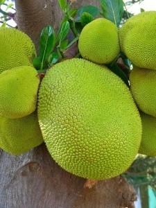 Jackfrucht und Bhakti Yoga