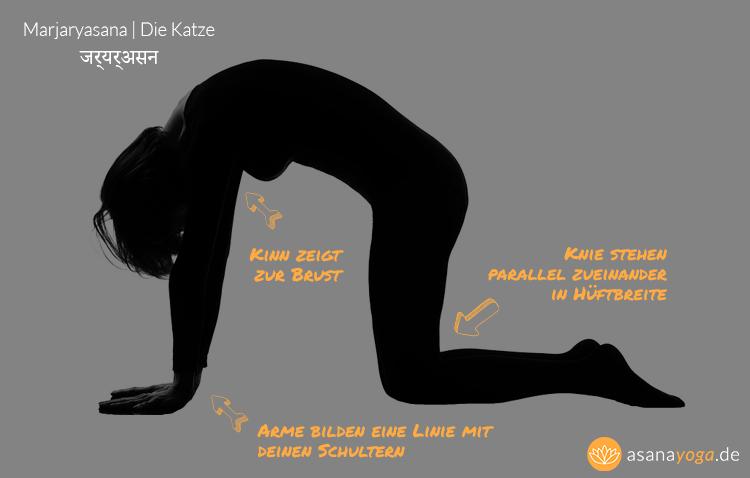 Yoga-Katze-Infografik