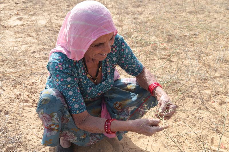 Ashram in Indien Mit Nani wilde Beeren pflücken
