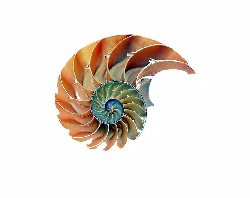 Heilige Geometrie shell-1847458_960_720