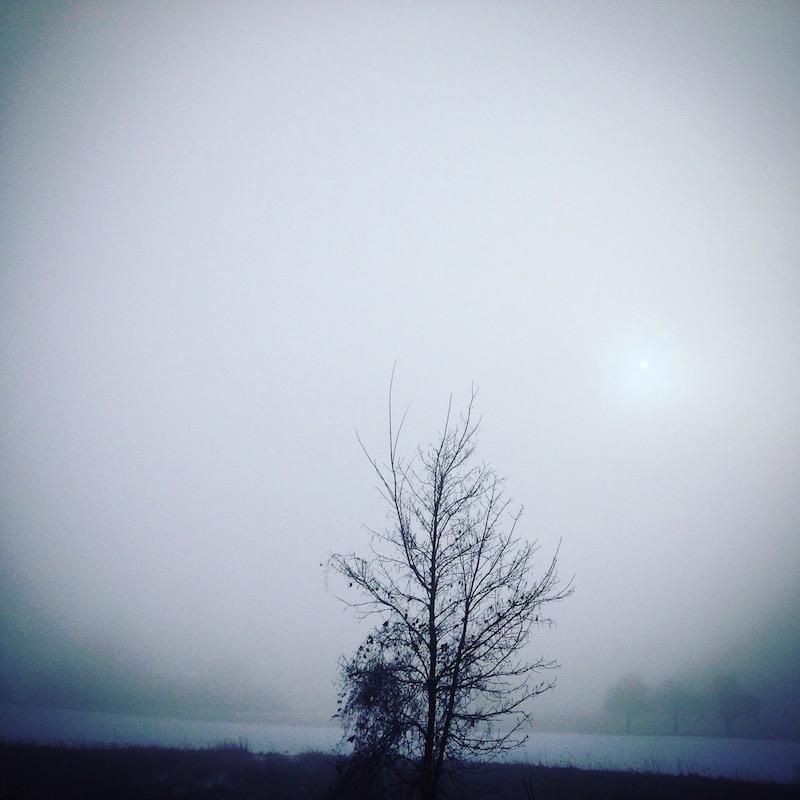 Wintertief besiegen Baum im Schnee