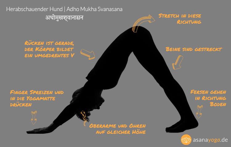 Yoga-fuer-Laeufer-Herabschauender-Hund