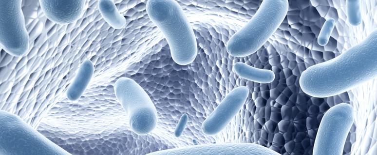 Tagebuch-Yogalehrer-Bakterien