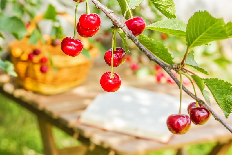 Lebensmittel gegen Entzündungen und Schmerz
